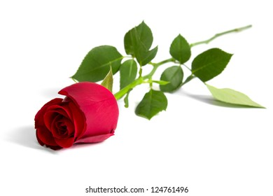 Red rose isolated on white background closeup shot