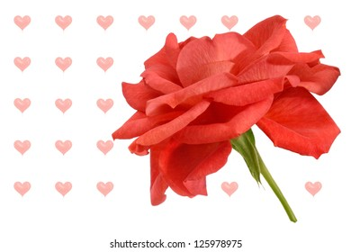 Red rose isolated on white  with heart shaped balloons as background suitable for valentine greeting.