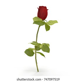 red rose isolated on white. 3D illustration