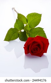 red rose isolated with shadow