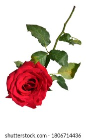Red rose isolated in white background, no shadow, roses with clipping path, Valentine's day background, romantic, love, Happy women's day, Happy Mother's day. Happy Father's day , Thanksgiving