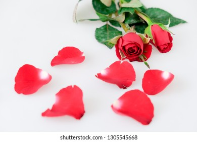 Red rose and leaves isolated on white background