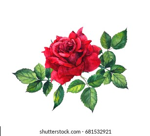 Red rose with leaves - single flower. Watercolor