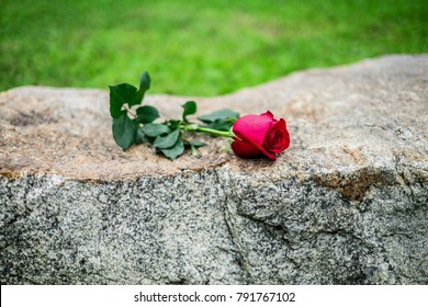 Red rose was left on gravestone in the graveyard for someone who passed away.