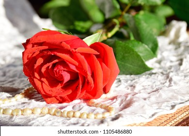 Red rose lies on white cloth. Pearl beads lie next to the red rose. Spray water on the rose petals.