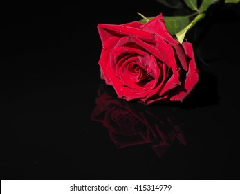 Red rose on a black background with reflection.