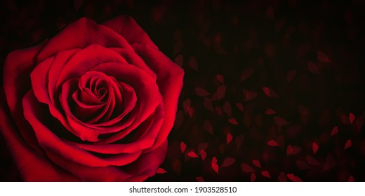 Red rose on dark background with blurred hearts.