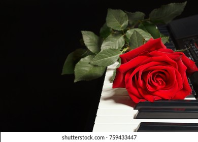 Red rose on keyboard of the electronic piano on a black background
