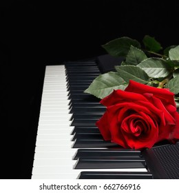 Red rose on the keys of the synth on a black background