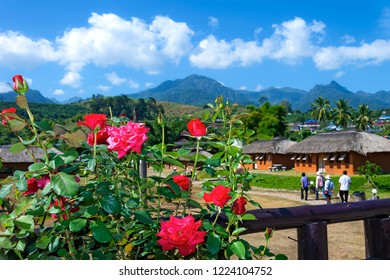 Red rose on mountain blurred background and cloud sky in Pai, Mae Hong Son province; thailand.