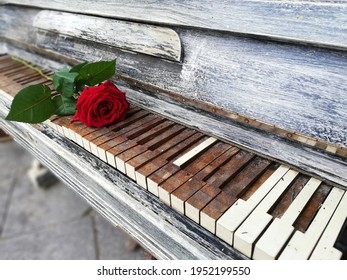 red rose on an old piano