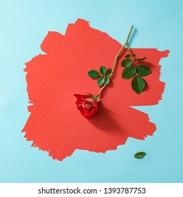 Red rose on painted red and pastel blue background. Minimal nature concept. Spring flower flat lay.