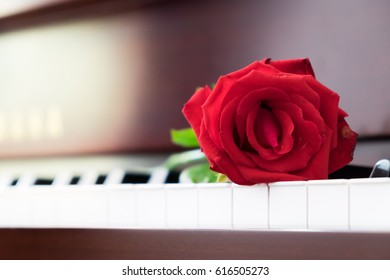 Red rose on piano in church.