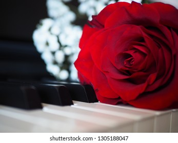 Red rose on piano, romantic music composition