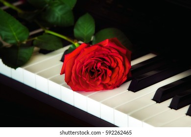 Red rose on the top of grand piano keys