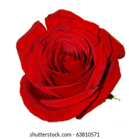 Red rose on the white background (isolated)