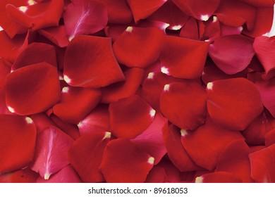Rose Petals Background Ez Canvas