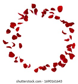 Red rose petals fly in the air. Isolated white background