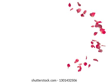 Red rose petals fly in a circle. The center free space for Your photos or text. Isolated white background