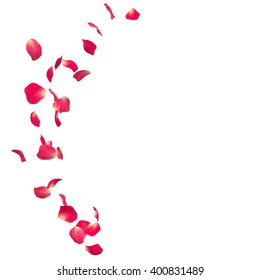 The red rose petals are flying in a circle on isolated white background. There is a place for Your text or photo