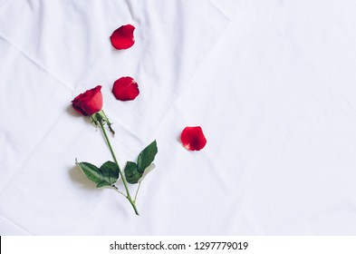 Red rose and petals on white bed honeymoon. Surprise Valentine's Day in bed. Top view. Copy space.