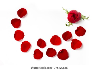 Red rose with red petals on white background as texture and background with place for text, Valentine's Day, Love, Spa tenderness fragrance of flowers Holiday