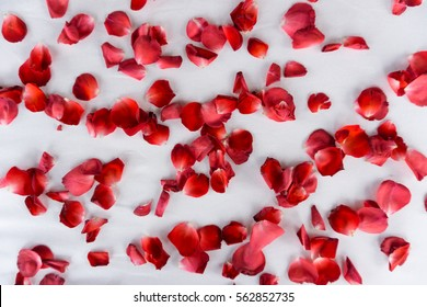 Red rose petals scattered on white bed sheet, top view