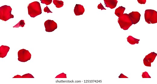 Red Rose Petals Stock Images