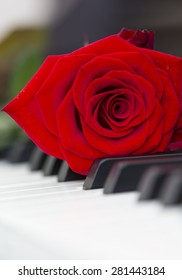 A red rose with a piano keyboard