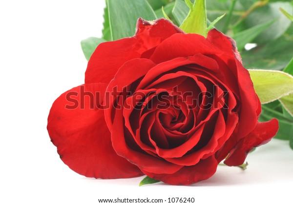 red rose - real macro