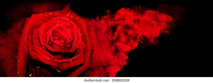A red rose with smoke and hearts splash on a black background