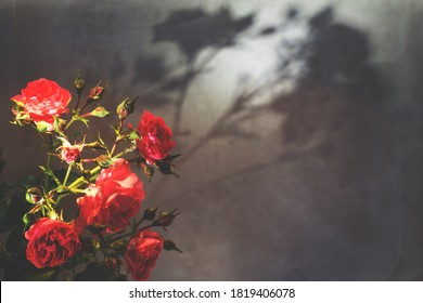 red rose with strong contrast and water drops on gray background. bouquet of flowers in a vase