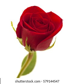 red rose, unopened,  isolated on white background