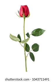 A red rose / valentine still life poster background material