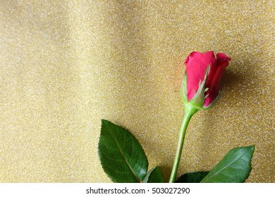 Red rose, in valentine's day