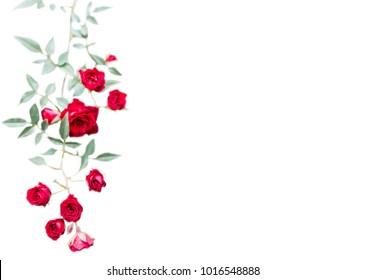 Rose Vine Images Stock Photos Vectors Shutterstock