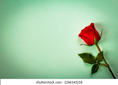 Red rose in vintage style. Floral retro background. Romantic, minimal style. Copy space.