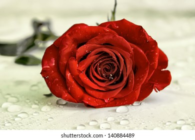 Red rose with water droplets.