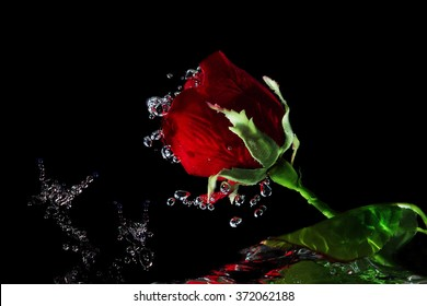 red rose in the water on black background Motion blur