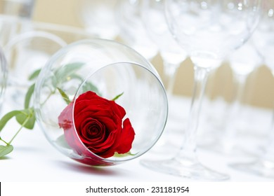Red Rose in Wine Goblet. Beautiful wedding decoration
