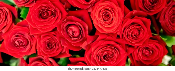 Red roses background. Many red roses, a huge bouquet of roses
