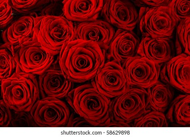 Red roses background - natural texture of love
