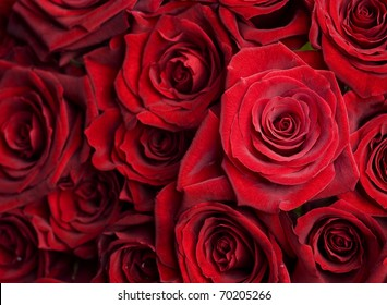Red Roses Background.Selective focus