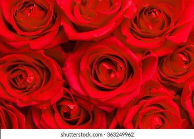 Red roses blooming seen from above filling the image
