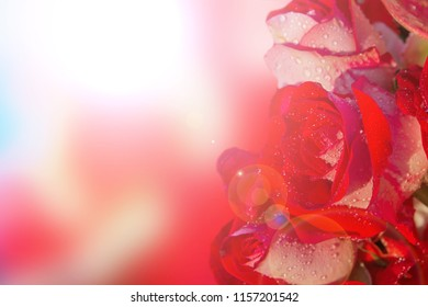 Red roses with bokeh sunset and copy space