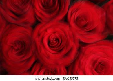 Red roses bouquet  background