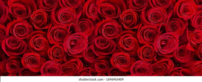 red roses   bouquet festive  background  with gold elements and gift box ,template greetings card banner For festive  Valentine day wishes and Women day