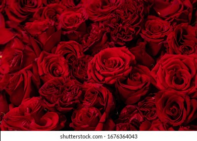 Red roses close-up, texture of flowers.