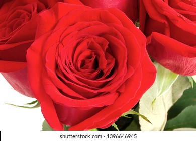 red roses flowers love bloom celebration romance