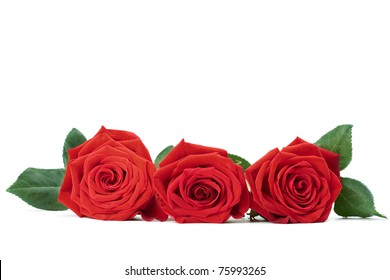 red roses isolated